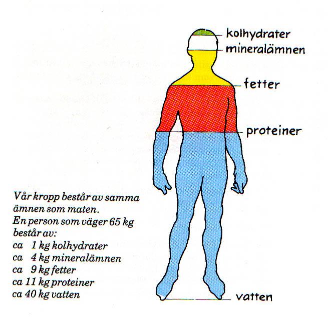 hur stor del av kroppen är vatten